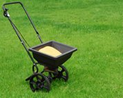 Seed or Sod: Weigh Your Green Lawn Options