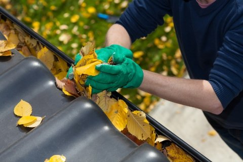 Person Wearing Green Gloves Clearing Yellow Leaves From Gutter