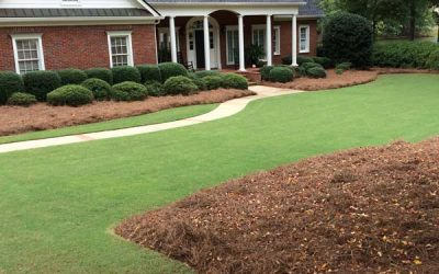 Preserve Your Lawn This Winter